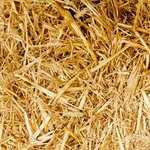Выбор саженцев. Как определить качественный посадочный материал?