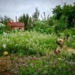 Лунный календарь садовода иогородника с 20 июня по 12 июля