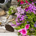 Что посадить под зиму на огороде, в саду и в цветнике