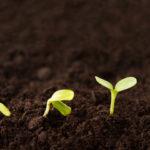 8 самых неприхотливых растений на огороде