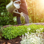 С чего начать работы весной в саду и огороде