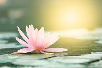 Лилия – непорочная царица цветов картинка