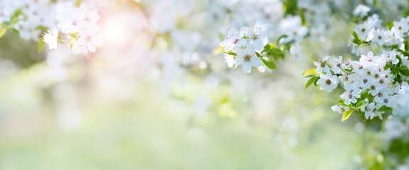 Весеннее пробуждение земли