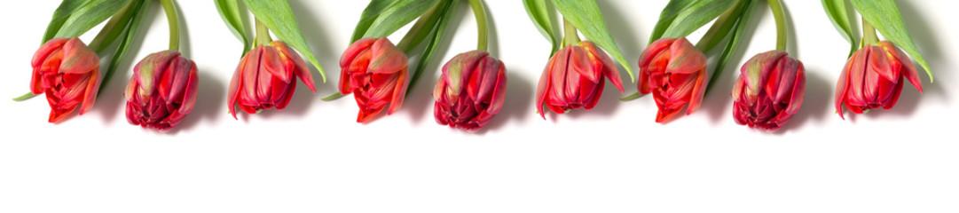 Сорта тюльпанов фото