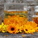 Аптекарский огород: как выращивать календулу в открытом грунте