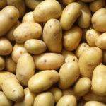 Лучший сорт картофеля для посадки на огороде