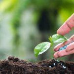 Минеральные удобрения: восполняем дефицит