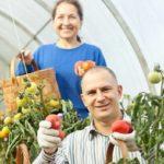 Влияние климата. Что и как выращивать в разных регионах страны