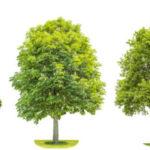 7 советов по пересадке деревьев и кустарников