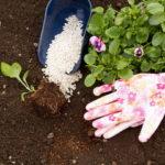 Летние подкормки или каждому овощу свое удобрение
