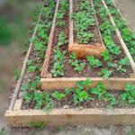 Вертикальный способ выращивания клубники — пирамида