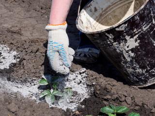 Как правильно применять золу для удобрения почвы