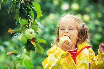Как самостоятельно вырастить яблоню