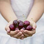 Секреты садоводства: плодовитая черешня весной, посадка и уход