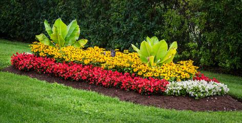 Как вырастить яркую и красивую клумбу?