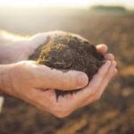 Как улучшить глинистую почву на садовом участке?