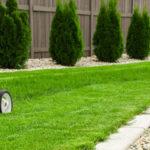 Как сделать газон своими руками?