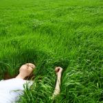 Как ухаживать за газоном на садовом участке?