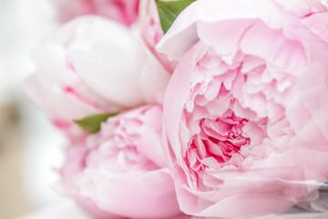 Как ухаживать за пионами в мае-июне, чтобы усилить и продлить цветение