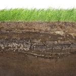Уход за почвой. Способы сохранения влажности грунта