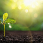 Удобрение почвы народными средствами