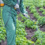 Как бороться с вредителями на плодово-ягодных культурах?