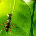 Как избавиться от муравьев на капусте?
