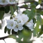 Уход за ягодными и плодовыми деревьями в июле