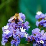 Секреты ухода за многолетними цветами