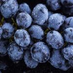 Виноград сорта «Черный палец» — самые крупные виноградины из всех сортов кишмиша