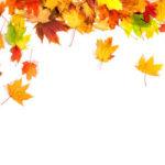 Жечь или компостировать опавшую листву