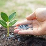 Какие минеральные вещества нужны растениям