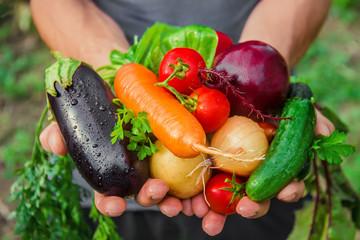 Секреты получения высоких урожаев овощей без удобрений и теплицы