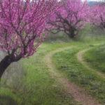 Размножение плодово-ягодных растений