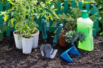 Лечим землю зелеными удобрениями