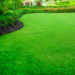 Как самостоятельно устроить газон