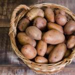 Картофель: правильная обработка земли