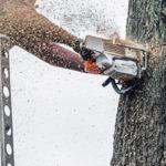 Как правильно спилить дерево