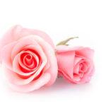 Как я начала выращивать розы! Семь ошибок начинающих цветоводов