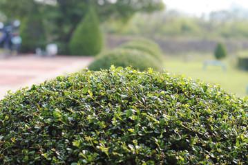 Декоративные кустарники сада: особенности выбора и посадки