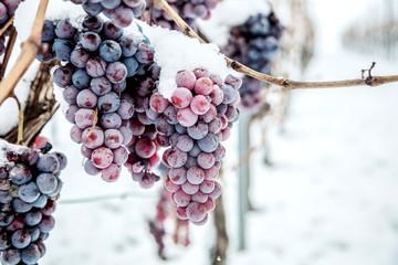 Подготавливаем виноград к зиме