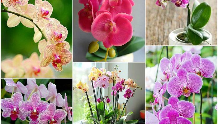 Что такое перекись водорода и можно ли использовать ее для орхидей?