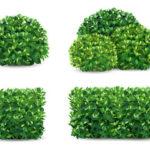 Живая изгородь: загадочность, уют и защита вашего дома