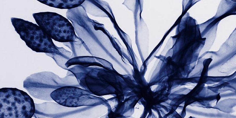 Язык цветов: основы флюрографики