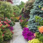 Красив и опасен. 5 ядовитых декоративных кустарников для сада