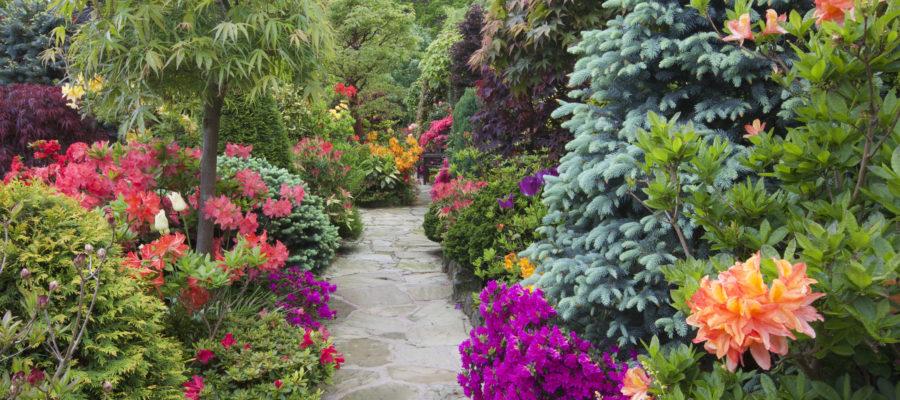 5 ядовитых декоративных кустарников для сада