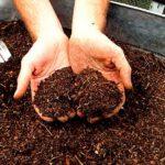 Дерновая земля: что это такое, зачем нужна, и как заготовить дерновый перегной