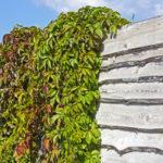Вертикальное озеленение. Конструкции и растения