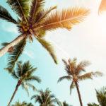 Выращиваем пальму