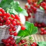 Секреты выращивания смородины